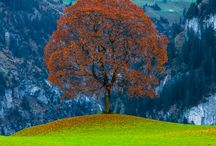 1 Nature