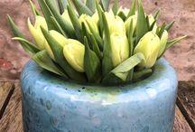 NEW AT KRIJNEN WEALTH OF FLOWERS