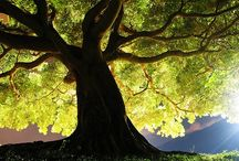 trees / by Leanna DeForest
