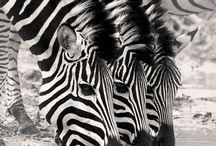 My Wildlife
