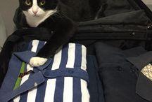 Cats / I miei gatti
