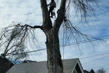 Tree Removal Omaha Nebraska
