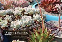 Plants and planters / by Cecilia Ai