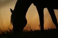 passion animals