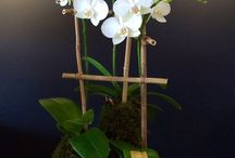 pétalas de orquídeas
