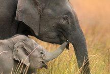 Animals / by Sylvia Jackson