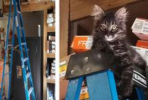 Kimber / New River Sports' Mascot - What's a store without a cat to keep us on our toes?
