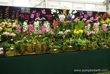 Orchids / Beautiful orchids.