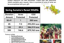Saving Sumatra's Rarest Wildlife (fundraiser) / This project: helps 2 indigenous forest communities, saves over 1,700 threatened plant & animal species, GREATLY enhances greenhouse gas sequestration & storage at global scale.   We are BioIntegrity. We help raise funds for the world's most globally-impactful environmental solutions. Please make a donation to this project via our partner: https://rainforesttrust.org/project/saving-sumatras-rarest-wildlife/  100% tax deductible, 100% of funds go to project. Contact us: BioIntegrity.net ☺