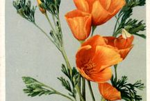 Blomster halfsleeve