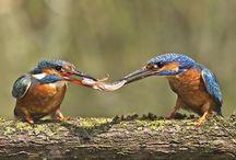 Birds / Ptáci okolo nás ....