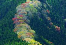 nature / 自然風景