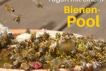 Gärten für Bienen und andere Insekten