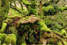 Old moss garden