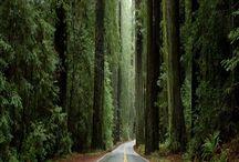 Erdő-Forest