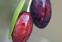 ABC's of Olacaea (Olive) / by Isye Whiting