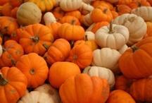 Autumn / by Jenny Bamford-Perkins