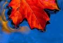 Art_Autumn leaves