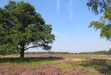 Wandelen op de Veluwe / In en rond de Veluwe in Gelderland zijn mooie wandelingen. Veel natuurschoon met veel wild(sporen) geeft dit deel van Nederland iets extra's.