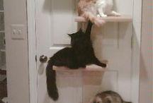 Macska bútorok
