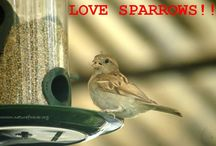 Wonderful World of Sparrows / Some memes, messages & images of House Sparrows.