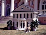 Fun Pet Luxury and decor / Pets need to live a glamorous life too.