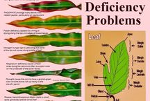 Planteproblemer
