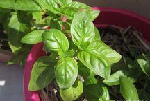 Jardiner - légumes