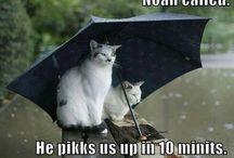 Kitties :)