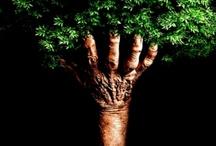 Projekt drzewo