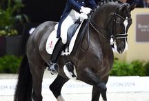 Valegro my Horse