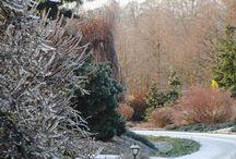 Winter Arboretum Trojanów / Lodowy album