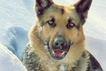 German Shepherd Friendzy / German Shepherd Friendzy is a passionate community of bulldog lovers looking to connect, share, and learn from others who share the same passion for the breed.