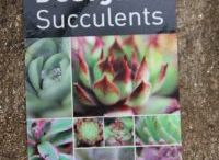 Succulents and plants