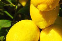 fruits nature