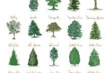Trees/bushes