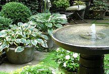 Características da água do jardim