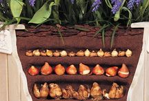 Spring Blooming Bulbs / Get great spring color by planting these bulbs September-November.