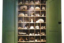 Curio - Wunderkammer