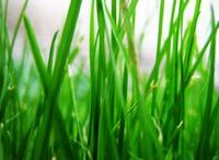 Lawn Care Tips / Esbenshade's Garden Centers offers tips for lawn care. Before you start any lawn care project you'll want to go over your lawn thoroughly, cleaning up the debris left by winter. Rake up those dead leaves, twigs, branches and grass. Also thatch and aerate the lawn as well, if necessary.