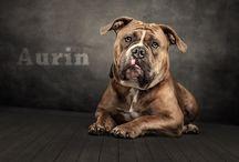 Tierische Fotos / Meine Fotografien aus der Tierwelt, hauptsächlich Hunde!