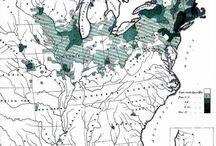emigración a América Irlanda 1900 en adelante