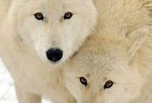 Love Dogs & Wolves