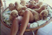 Caninitos