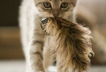 Best cat pics ever