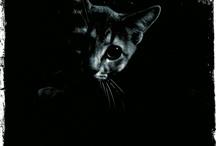 Bella....the Queen Cat