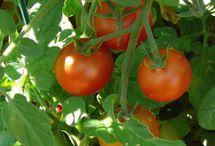 Gardening Tips / Gardening