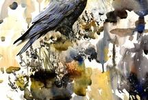 Raben / Raven / Krähen / Crow