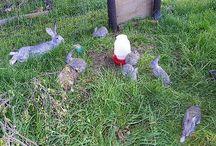 Farm - Rabbits