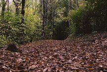 histórias de outono...